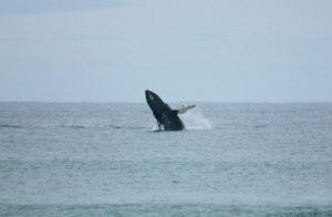 whale baja, La Alianza baja, la alianza, vacation rentals